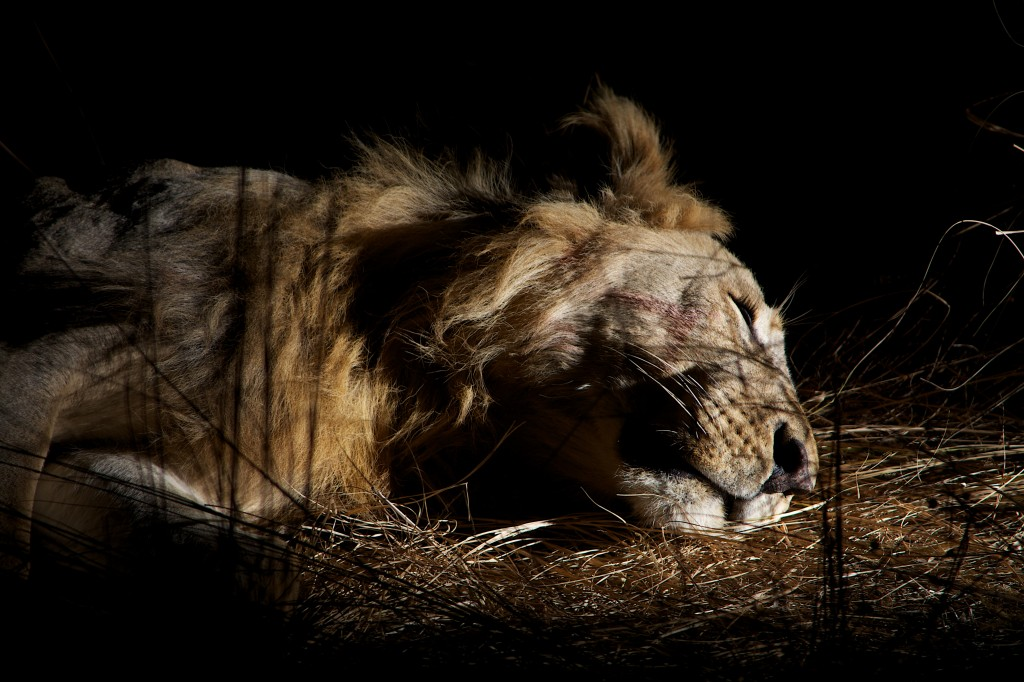 De natuur slaapt en is altijd wakker.
